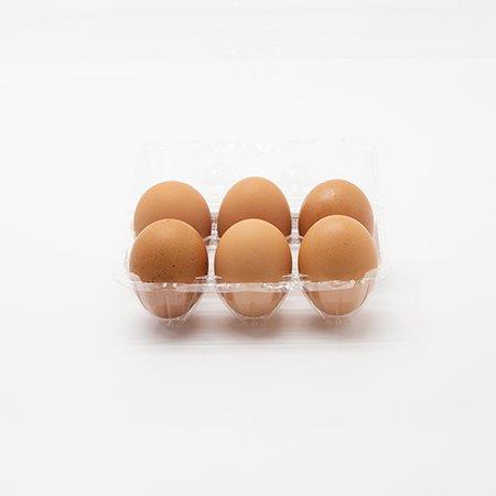乳酸卵6_2